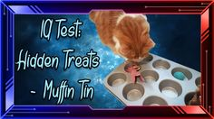 IQ Test:  Hidden Treats - Muffin Tin !