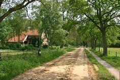 Noordlaren - Noordlaarderbos Duinweg