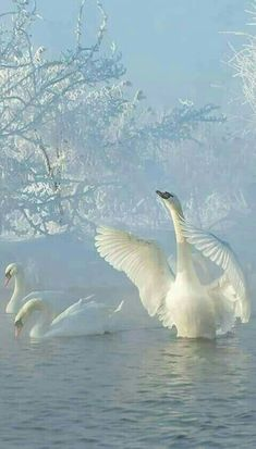 BEAUTIFUL SWAN LAKE