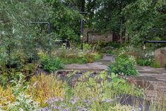 """The M&G Garden at Chelsea 2021 is a """"pocket park"""" for city dwellers – take a look Chelsea Flower Show, Pocket Park, Native Gardens, Stepping Stones, Plants, Wildlife, Take That, City, Outdoor Decor"""