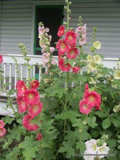 Amish Acres - a visit to Indiana varitas de san jose Unique Gardens, Beautiful Gardens, Hollyhocks Flowers, Irises, Amish Acres, Let's Make Art, Grandmas Garden, Lawn And Garden, Side Garden