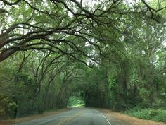 Amelia Island http://www.vacationrentalpeople.com/vacation-rentals.aspx/World/USA/Florida/East-Coast/Amelia-Island