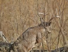 Five Ways You Can Miss A Whitetail While Bowhunting - NAW