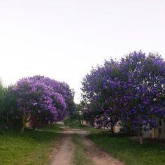 Divinópolis - MG - Brasil  164479_572795389399156_454489075_n.jpg (403×403)