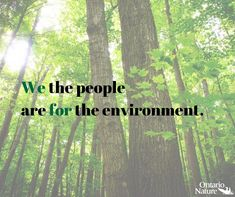 Please tell Premier Ford, Finance Minister Fedeli and Cabinet Ministers that Ontarians need the office of the Environmental Commissioner of Ontario and reject the slashing of this essential oversight and accountability role. Cabinet Minister, What Is Need, Worlds Of Fun, The Office, We The People, The Locals, Geography, Ontario