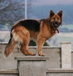 A neighbour's dog   Must Have Pet Insurance! http://www.offers.couponrainbow.com/embrace-pet-insurance/