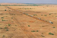 Awesome pic of  road trains at Helen Springs North of  Tennant Creek.  Only in Australia will you see this. There are 17 trucks with 3 trailers and 2 decks per trailer.    So 102 decks of cattle approx. 28 cattle per deck. That's a lot of cattle loaded. The spareness of the scenery only enhances the picture