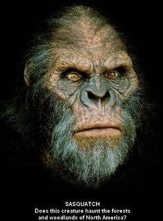 Sasquatch, the myth . The legend! it lives . Real Bigfoot Pictures, Bigfoot Photos, Yeti Bigfoot, Bigfoot Sasquatch, Fantasy Creatures, Mythical Creatures, Bigfoot Stories, Pie Grande, Finding Bigfoot