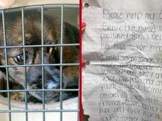 Una perrita con parálisis fue dejada en la puerta de un refugio de Tampa Bay, Florida junto a una...