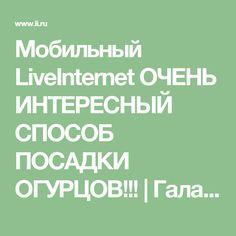 Мобильный LiveInternet ОЧЕНЬ ИНТЕРЕСНЫЙ СПОСОБ ПОСАДКИ ОГУРЦОВ!!! | ГалаНика - Дневник ГалаНика |