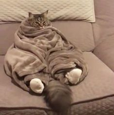This is the way .... Cold saturday night So Lovely!!! LOVE Cats SLVH ♥♥♥