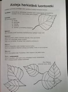 Metsäretki Environmental Education, Primary Education, Early Education, Early Childhood Education, Nature Activities, Sensory Activities, Activities For Kids, Kindergarten Crafts, Teaching Kindergarten