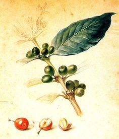 JEAN BAPTISTE DEBRET Café; 1823