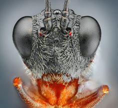 Dragon - fly Macro Photography