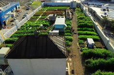 Quanto costa fare un orto sul tetto? E quali sono i benefici di un orto sul tetto per i condomini e per la collettività?