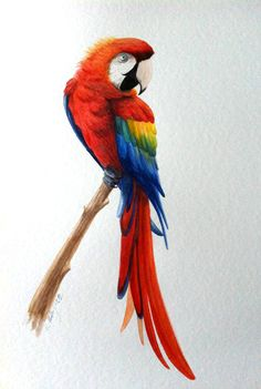 Parrot drawing / Pappagallo, disegno - Art by umfdidumf on DeviantArt
