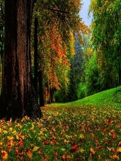 I wanna roll down that hill, sprawl in those leaves, and watch the cloud shapes