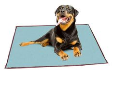 ABO Gear 20 by 36-Inch Pet Cooling Bed Medium Baby Blue/Brown