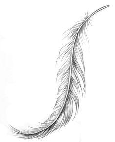 """Résultat de recherche d'images pour """"tatouage plume realiste cotes"""""""