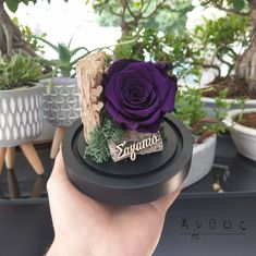 "Deep Purple ""Forever Rose"" mini  Τριαντάφυλλο που διαρκεί για χρόνια, σε μία πολύ ιδιαίτερη απόχρωση του μωβ. Αν ψάχνεις κάποιο μοναδικό σε χρώμα τριαντάφυλλο αυτή είναι η ομορφότερη επιλογή!  Τα τριαντάφυλλα αυτά μπορείτε να τα απολαμβάνετε για χρόνια, χωρίς να χρειάζεται να κάνετε κάτι. Είναι μέσα σε γυάλινη καμπάνα ώστε να το χαρείτε όσο το δυνατόν περισσότερο!  Αποστολή λουλουδιών σε όλη τη Θεσσαλονίκη, ακόμη και την Κυριακή! 🛒 www.anthos.com.gr  #foreverrose #purpleroses #flowers… Cake, Desserts, Food, Tailgate Desserts, Deserts, Kuchen, Essen, Postres, Meals"