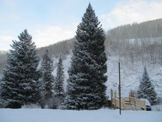 The 2012 U.S. Capitol Christmas Tree is located at Ripple Creek Lodge!