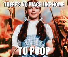 You Know You're Right, Dorothy // funny pictures - funny photos - funny images - funny pics - funny quotes - #lol #humor #funnypictures