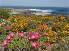 namaqualand - Google Search South African Flowers, Tv Spielfilm, Meadow Garden, Forest View, Beautiful Forest, Garden Types, Desert Plants, Culture, Blossom Flower
