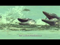 You Won't Believe What this Incredibly Smart Dolphin is Doing! [VIDEO]