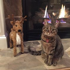 Look at your holiday decorations and changes in the house in complete confusion. | 15 Things All Cats Do At Christmastime