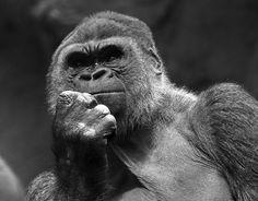 Imatge: Pablo Galarza      Com més i més m'hi fico, més me n'adono que no acabaré mai per saber tot el que hi ha sobre la moda so... Humor, Animals, Frases, Spirituality, Thoughts, Pictures, Health, Animales, Animaux