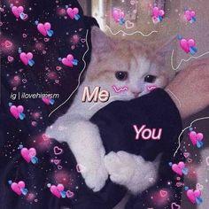 Cute Cat Memes, Cute Animal Memes, Cute Love Memes, Funny Memes, Love Memes For Him, Kittens Cutest, Cute Cats, Funny Cats, Cartoon Mignon