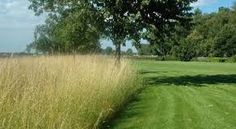 Afbeeldingsresultaat voor grassen