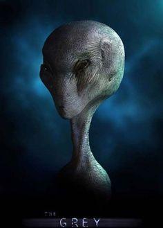Large Grey Aliens Require Full Disclosure by - UFO International Project Aliens And Ufos, Ancient Aliens, Alien Creatures, Fantasy Creatures, Alien Gris, Concept Art Alien, Star Trek, Science Fiction, Arte Alien