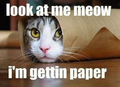 HAHA! Chris Brown got nothin' on this kitty!