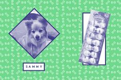 """The Best Dog Treats — Straight From The Canines Of R29 #refinery29  http://www.refinery29.com/best-dog-treats#slide1  Sammy  """"I has a bone, I is happy and busy, and my teeths get clean.""""Parent: Laura Miller, photo editor"""