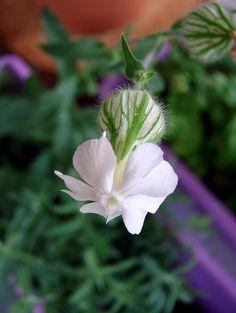 Flower | Flickr – Condivisione di foto!