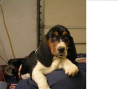 Freckles & charlie pup goldenhausk9.com