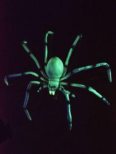 XXL Schwarzlicht Spinne Halloween Grün  #blacklight #schwarzlicht #halloween #party #deco #glowinthedark #fluo #psy #spider