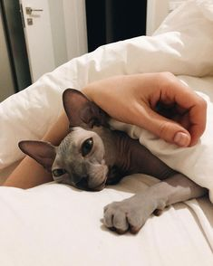 Beautiful Cats, Animals Beautiful, I Love Cats, Cute Cats, Adorable Kittens, Cute Hairless Cat, Sphinx Cat, Image Chat, Amor Animal