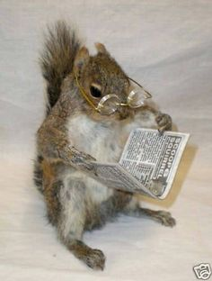 Image result for squirrel with book