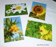 Lot de 4 cartes postales 10,5x15cm Coccinelle et fleurs jaunes réalisées avec les photos de Céline Photos Art Nature. : Cartes par celinephotosartnature