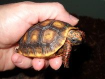 Six tips for surrendering an animal to a rescue (something I hope NEVER to do. My babies are with me for LIFE!) #examinercom