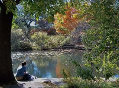 Caldwell Lily Pool, a peaceful spot just South of Lincoln Park Zoo.