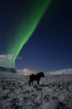 Horse and Aurora Photo by Helgi Sigurðsson — National Geographic Your Shot