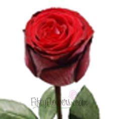 FiftyFlowers.com - Gospel Dark Red Rose