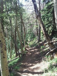 Bear Jaw Trail AZ