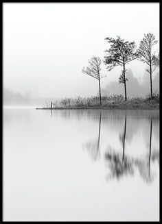 Forest silhouette - 50x70Lake - 50x70...