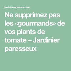 Ne supprimez pas les «gourmands» de vos plants de tomate – Jardinier paresseux