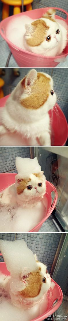 I'm pretty sure I keep pinning the same cat, but this cat is so friggin' adorable. I WANT HIM.