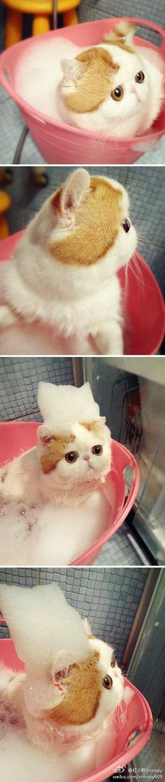 cat snoopy